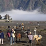 The horses ready to take people up to the Bromo crater.