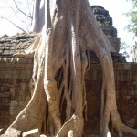 Trees covering Ta Prohm