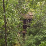 View of the tree house