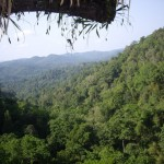 Beautiful view of the jungle valley from the tree house