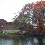 The beautiful trees down by the river in Chiang Mai